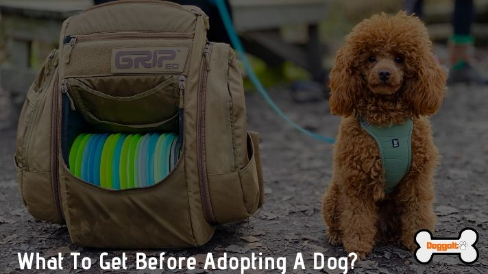 Things to get before adopting a dog