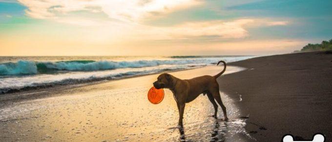 Benefits of dog toys