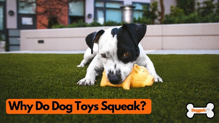 Why do dog toys squeak