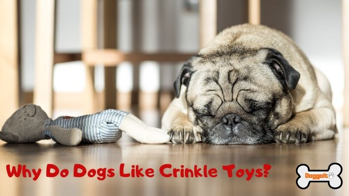Why do dogs like crinkle toys