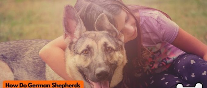 How do German shepherds show affection