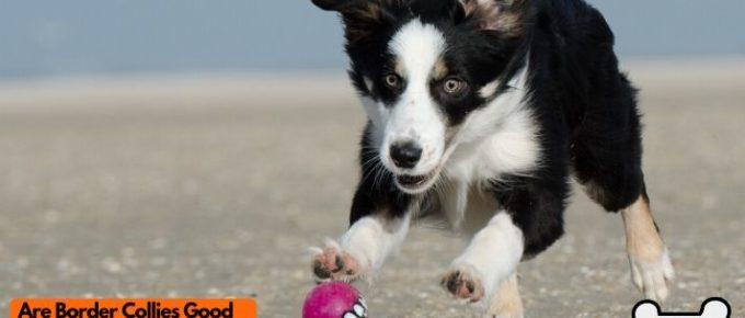 are border collies good family dogs