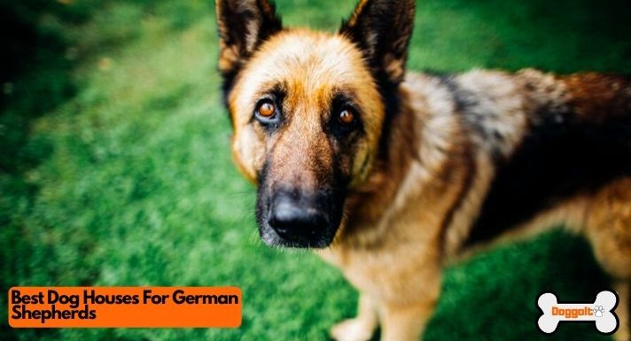 Best dog houses for german shepherds