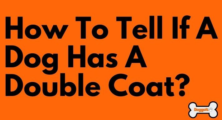 How to tell if a dog has a double coat