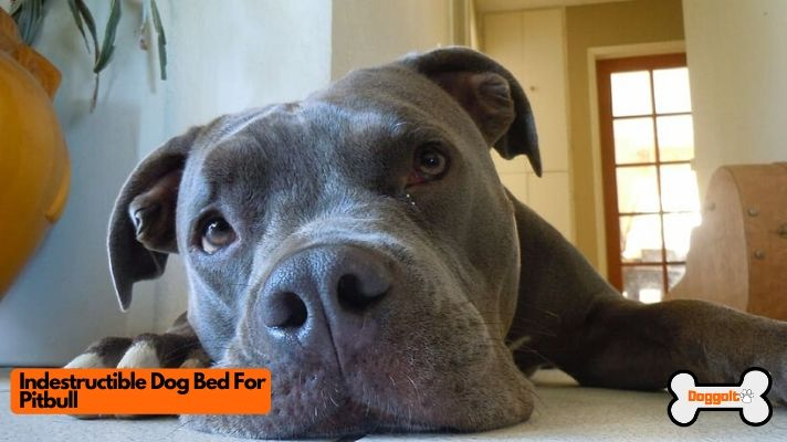 Indestructible Dog Bed For Pitbull
