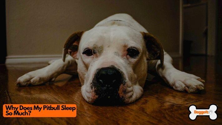 why does my pitbull sleep so much