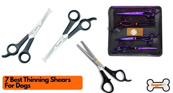 Best thinning shears for dogs