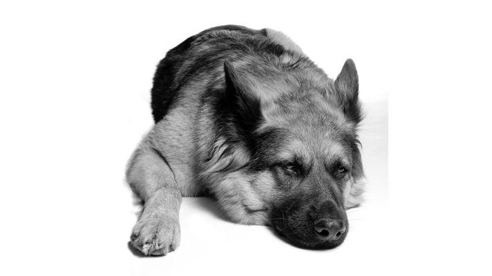 Dog house for German Shepherd