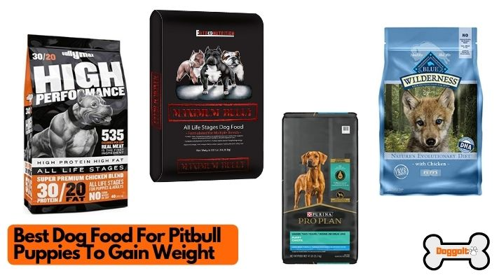 Best dog food for Pitbull puppies to gain weight