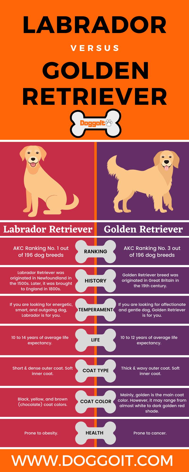 Labrador retriever versus Golden retriever infographic