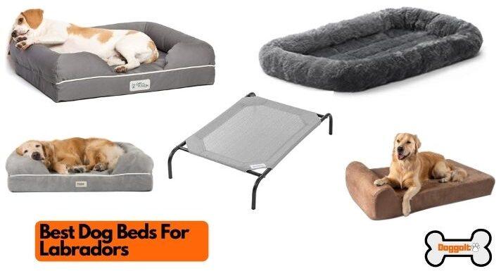 Best dog beds for Labradors