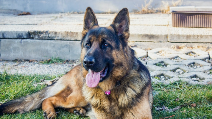 Buying a dog crate for german shepherd