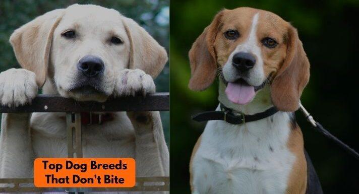 Dog breeds that don't bite