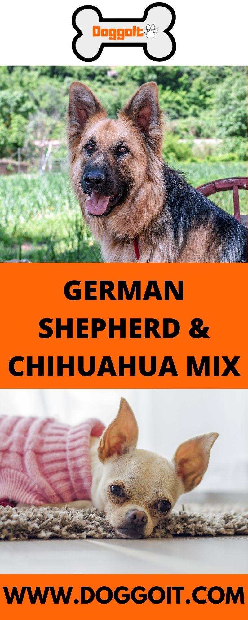 German Shepherd and Chihuahua Mix Dog