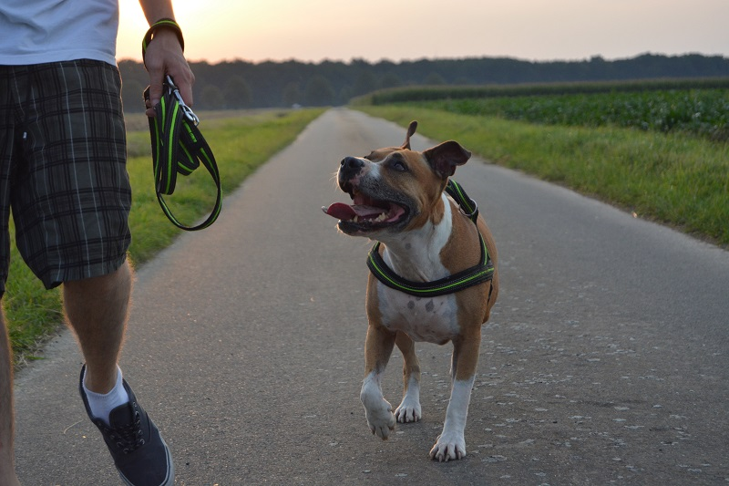 How Much Exercise Does A Pitbull Need? 3 Easy Activities To Try!